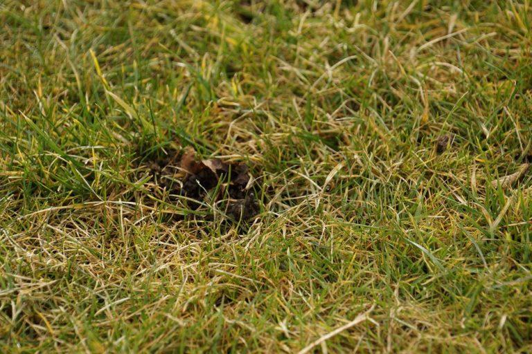 Löcher im Rasen - woher stammen sie