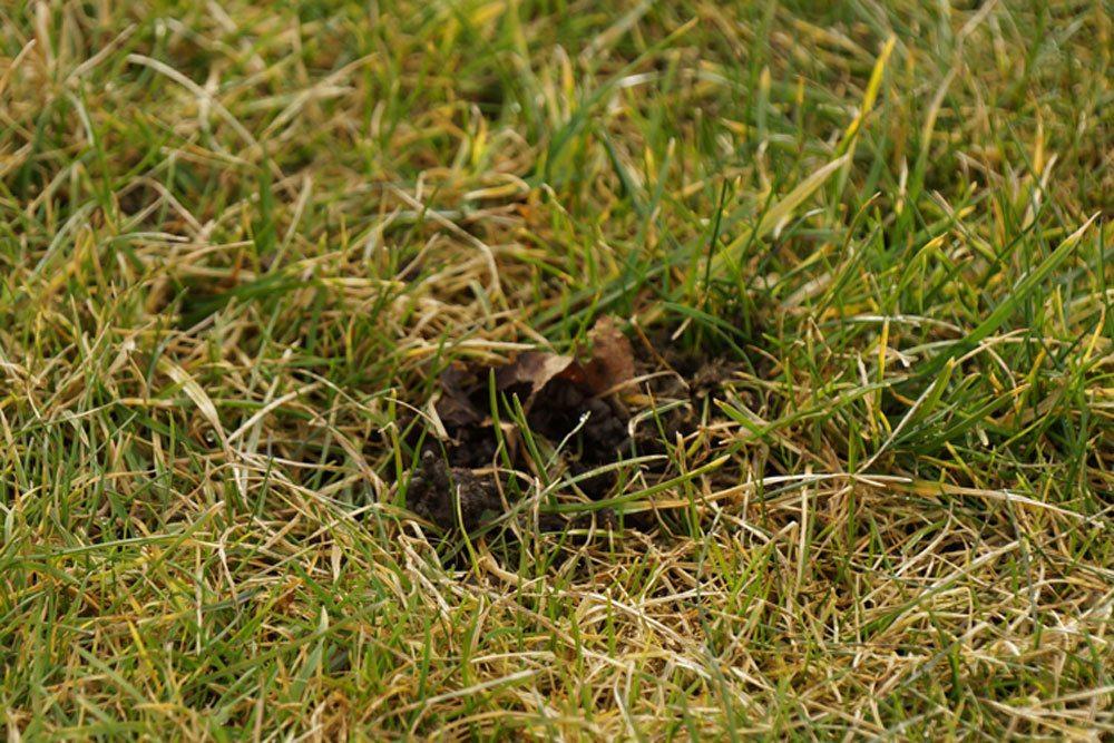 Löcher im Rasen haben unterschiedliche Ursachen