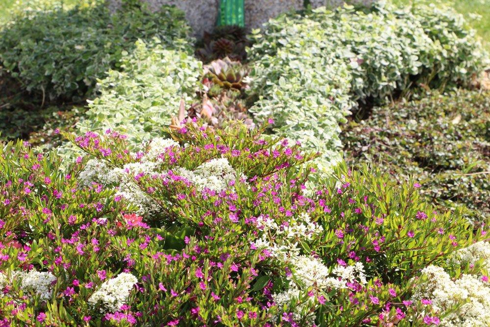 Grabbepflanzung für sonnige Standorte