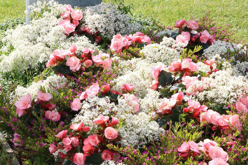 Grabbepflanzung der Jahreszeit anpassen