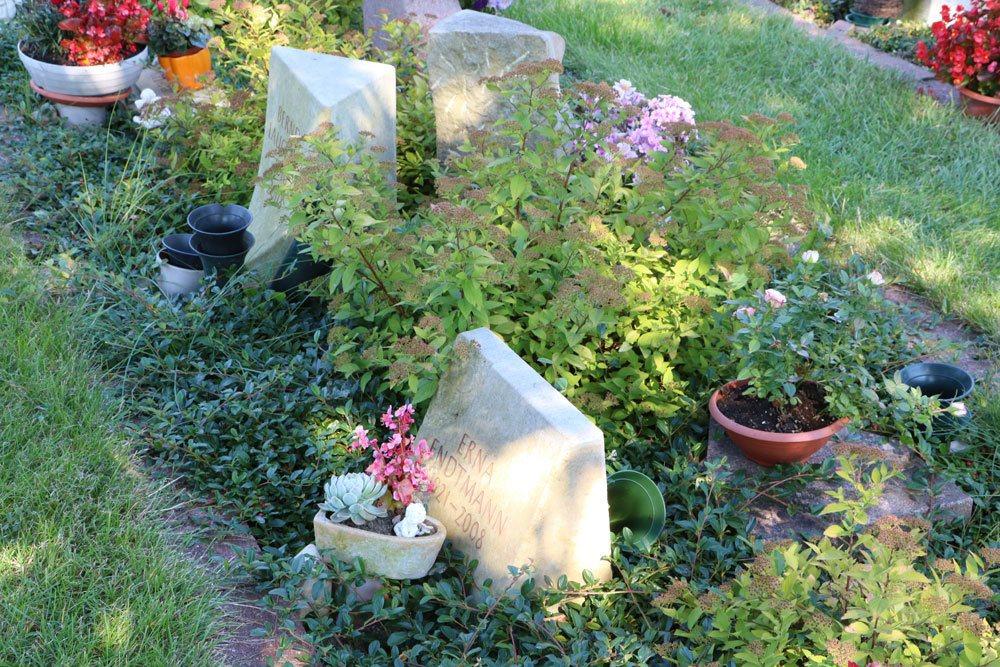 Grabbepflanzung halbschattiger Standorte