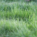 Rasenhöhe gibt an, wann gemäht wird