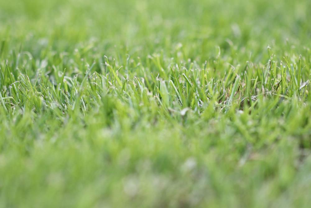 Rasen frisch gemäht