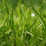 Rasen neu anlegen oder erneuern