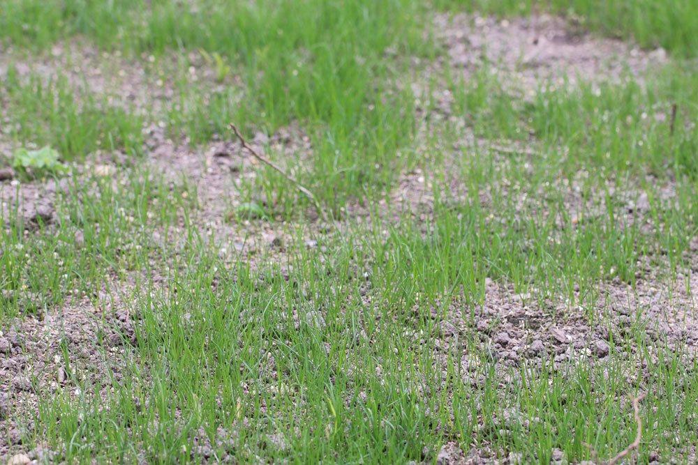 Rasen sanden zur Rasenoptimierung
