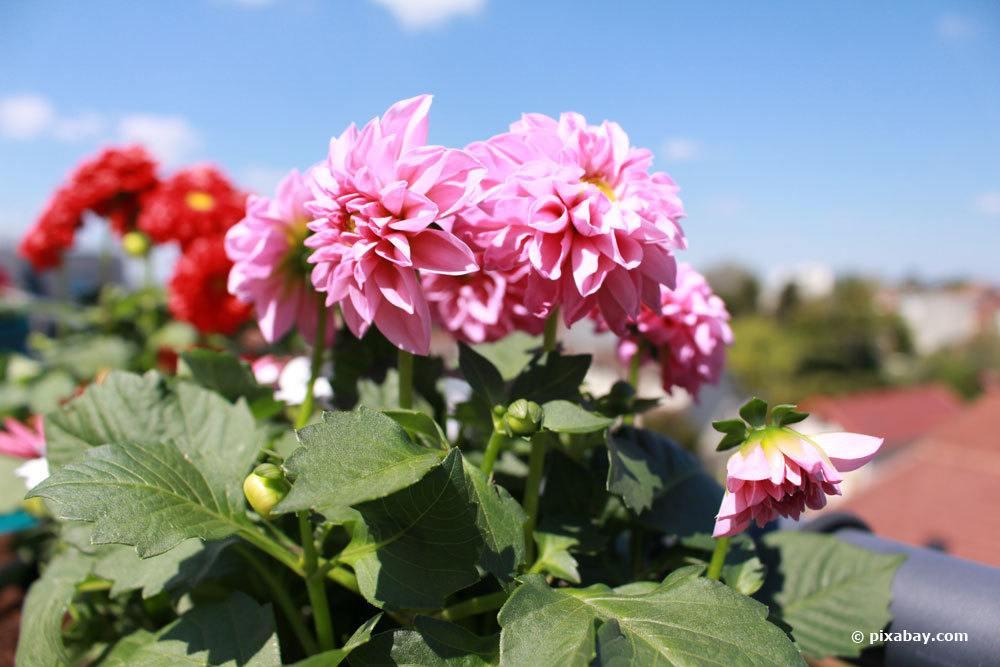 Herbstbepflanzung mit bienenfreundlichen Blumen