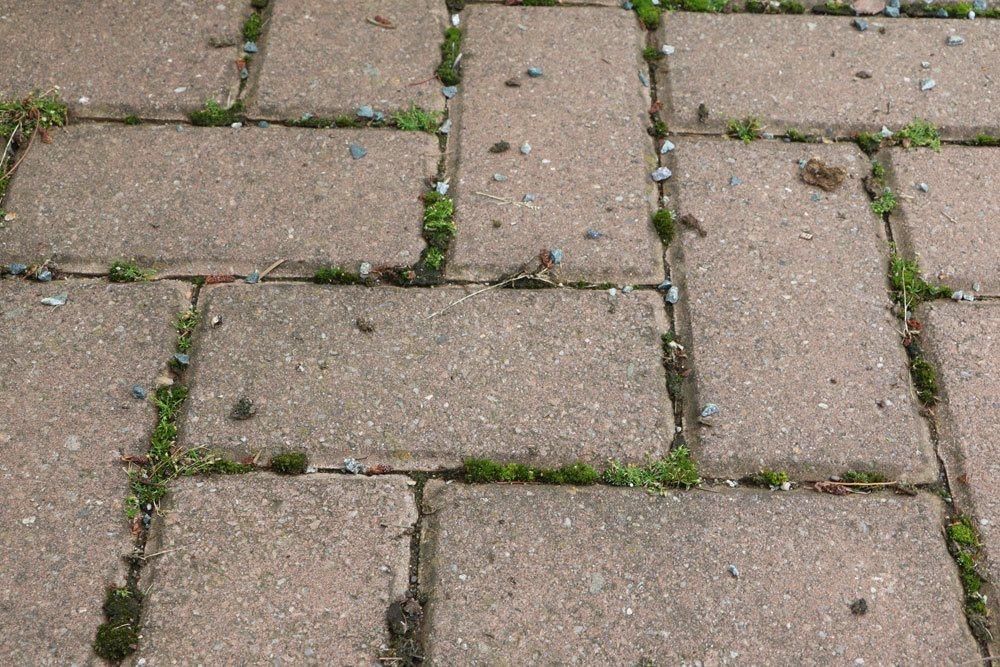 Unkrautwuchs zwischen Steinplatten