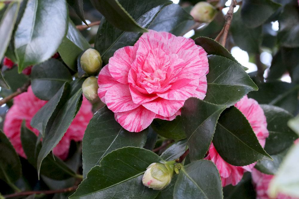 Winterharte Balkonpflanzen Diese 33 Kubelpflanzen Sind Zu Empfehlen