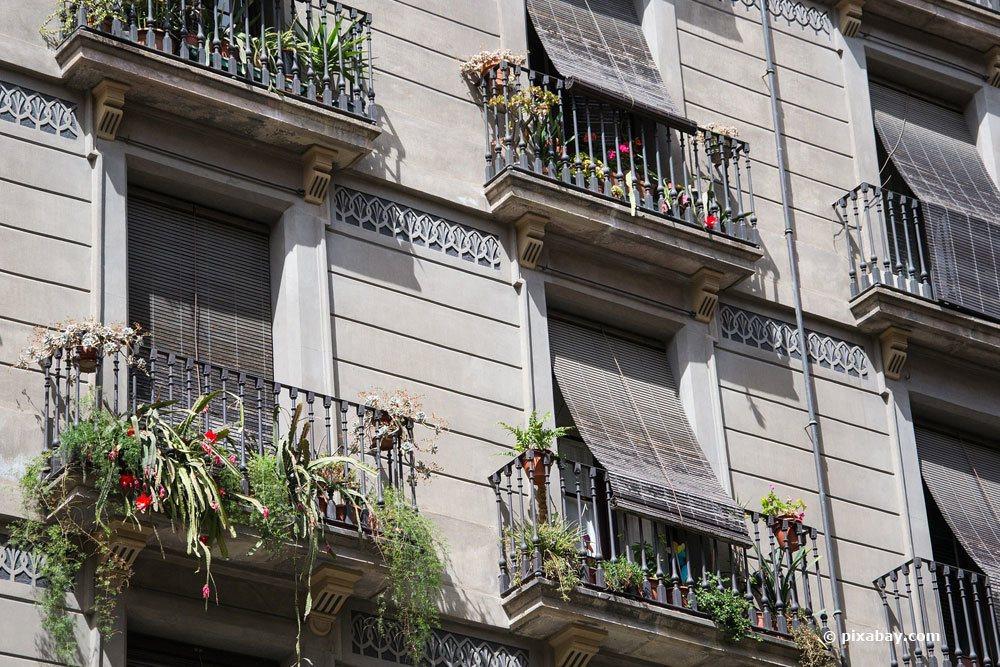 winterharte balkonpflanzen diese 33 k belpflanzen sind. Black Bedroom Furniture Sets. Home Design Ideas