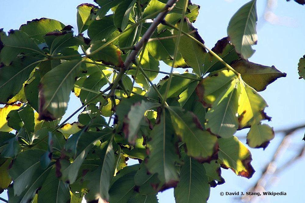 Affenbrotbaum braucht einen hellen und sonnigen Standort