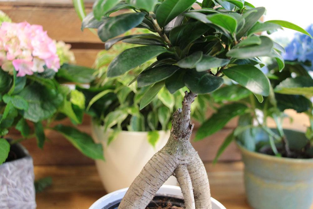 Bonsai kann variabel gestaltet werden