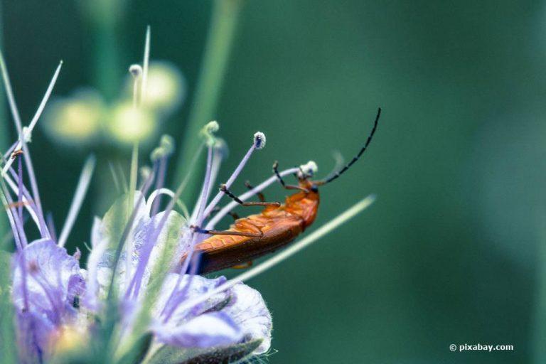 kleine braune Käfer in der Wohnung