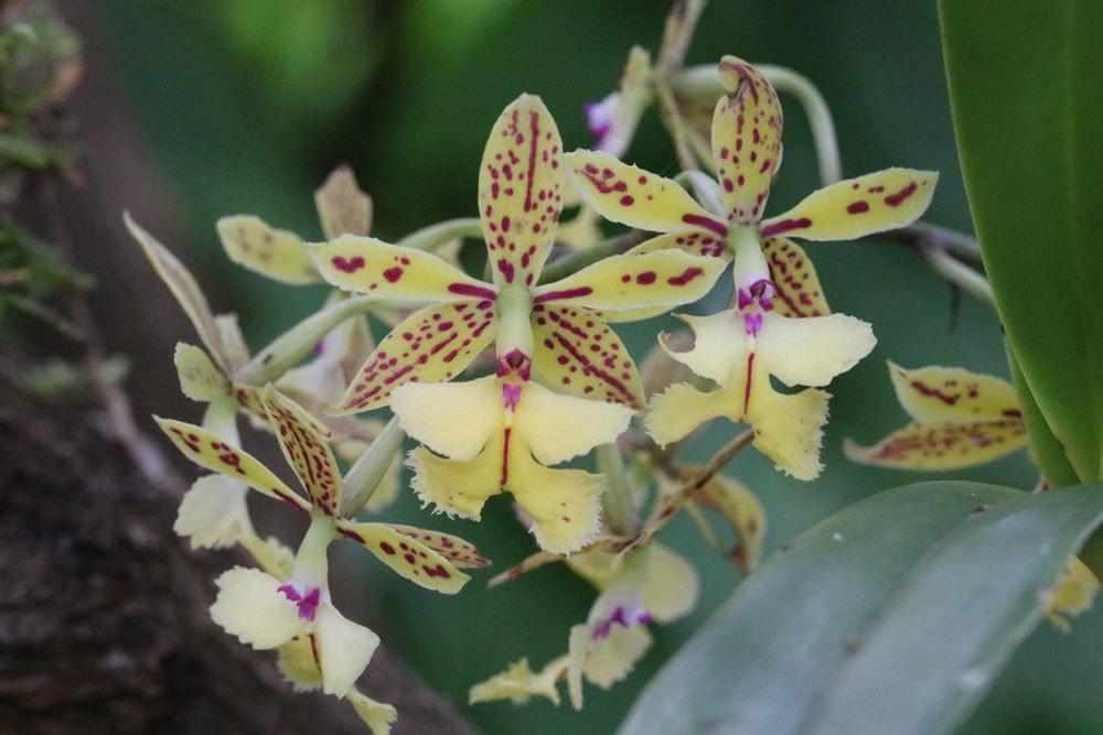 Orchidee zum Blühen bringen