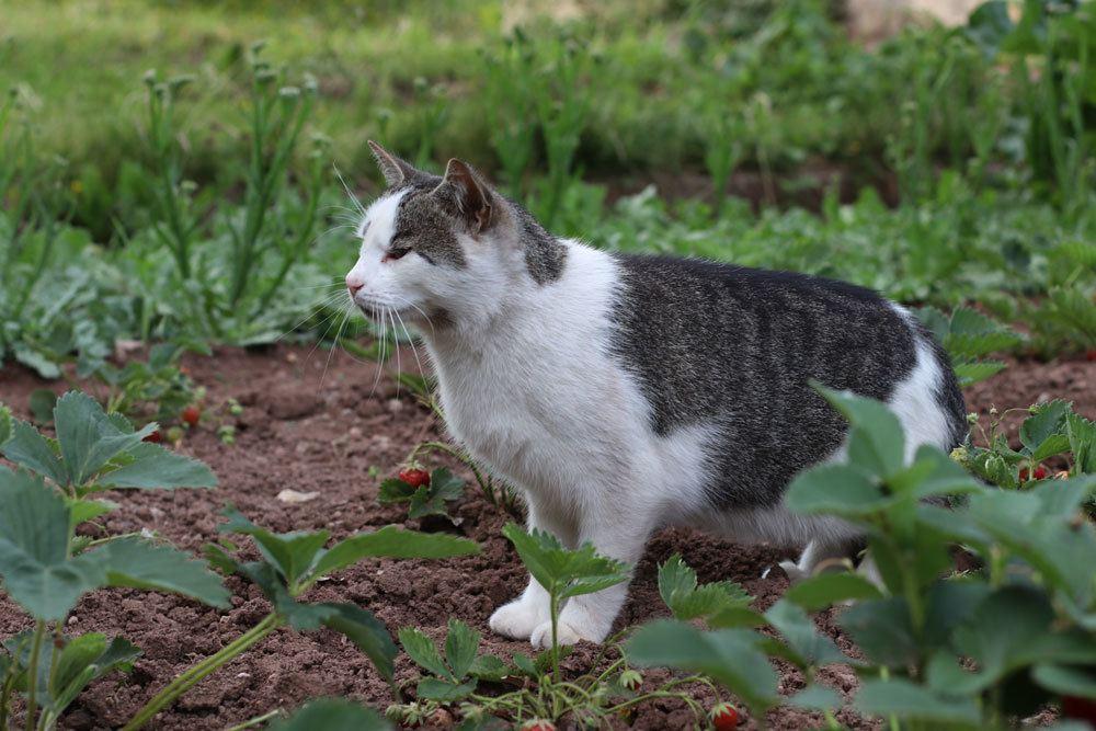 Katzen im Garten können mit der Verpiss-Dich-Pflanze vertrieben werden