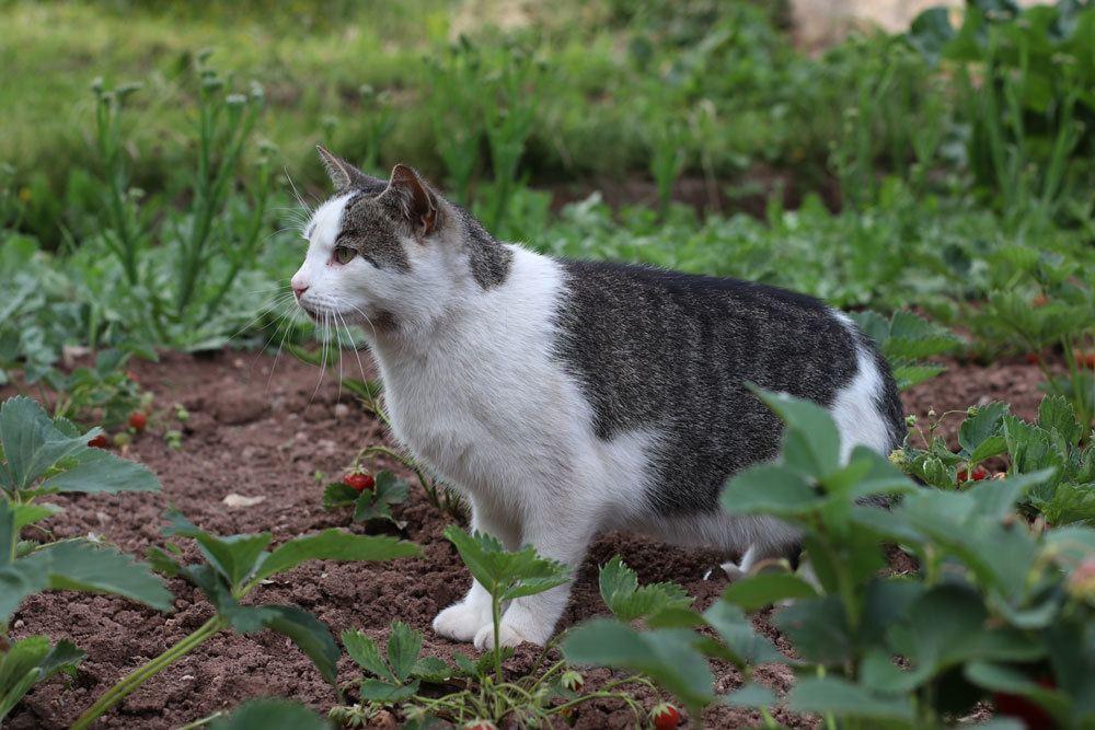 Katze im Gartenareal