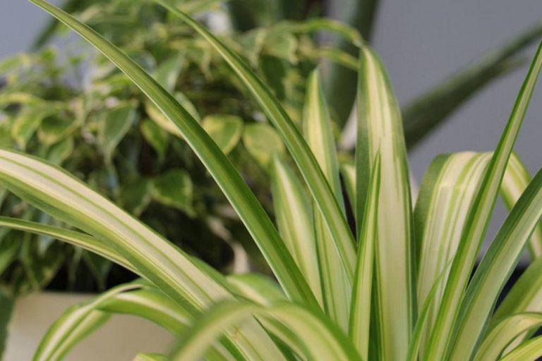 Büropflanzen für ein besseres Raumklima