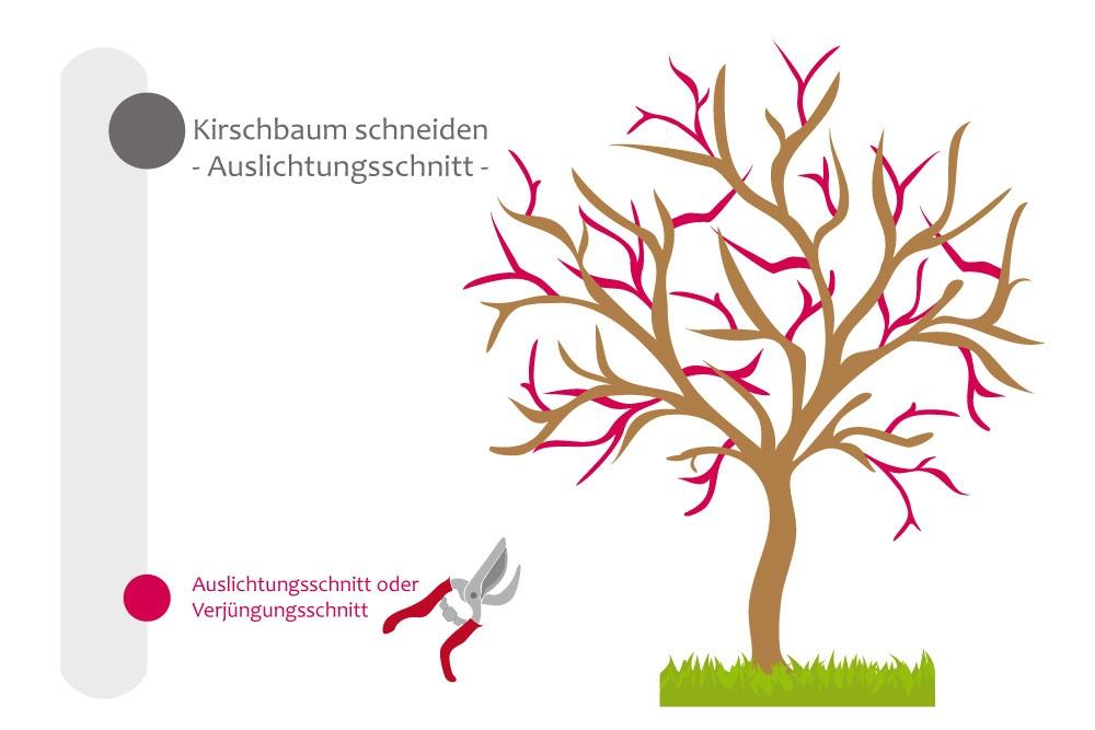 kirschbaum schneiden bebilderte anleitung f r den kirschbaumschnitt. Black Bedroom Furniture Sets. Home Design Ideas
