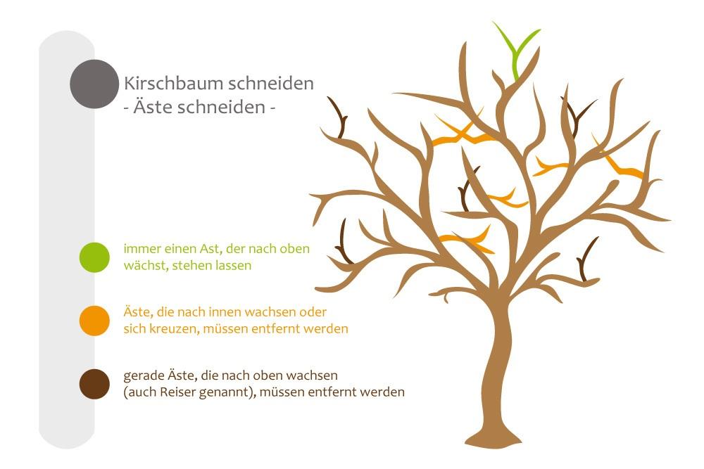 Geliebte Kirschbaum schneiden - bebilderte Anleitung für den Kirschbaumschnitt @LR_36