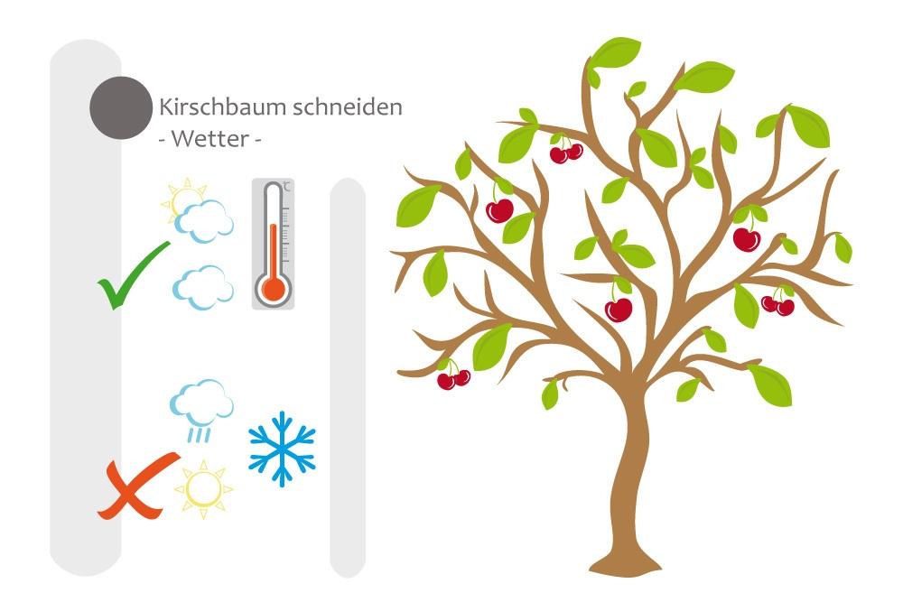 Berühmt Kirschbaum schneiden - bebilderte Anleitung für den Kirschbaumschnitt #XK_07