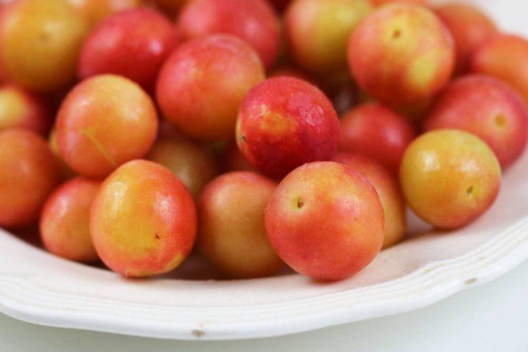reife Mirabellenfrüchte des Mirabellenbaums