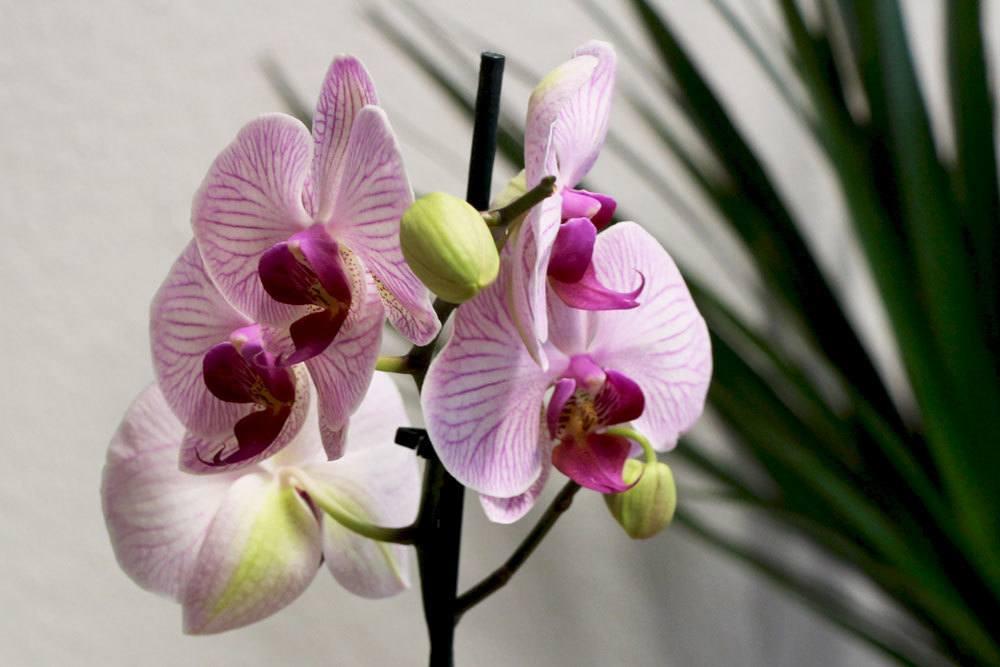 Orchideen Im Glas Halten Pflege Von Orchideen Ohne Erde