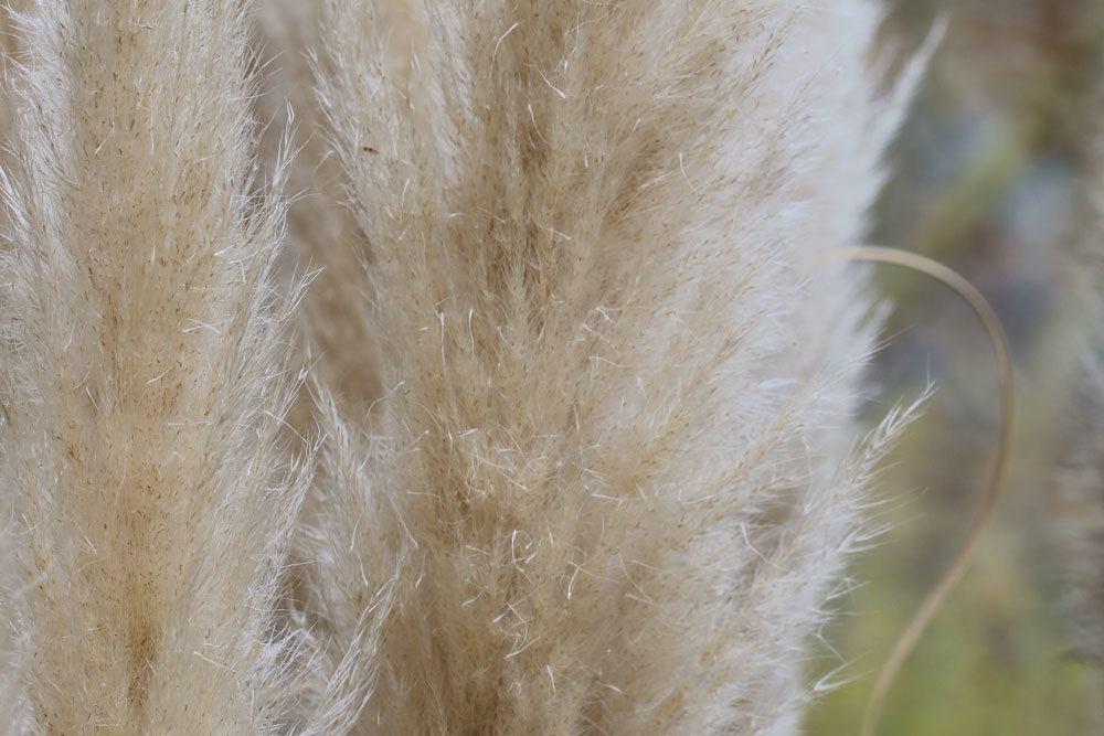 Pampasgrashalme können im Winter locker zusammengebunden werden