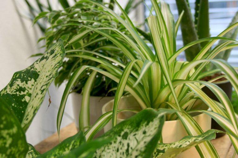 Sonne liebende Zimmerpflanzen
