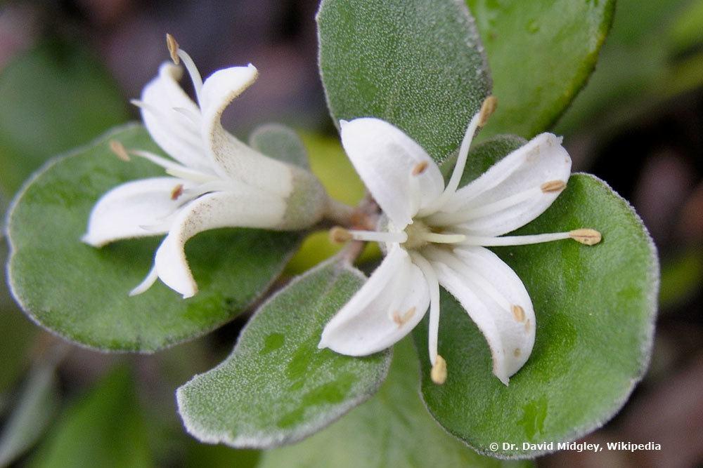 10 Sonne liebende Zimmerpflanzen - Pflanzen für die Südseite/Südfenster