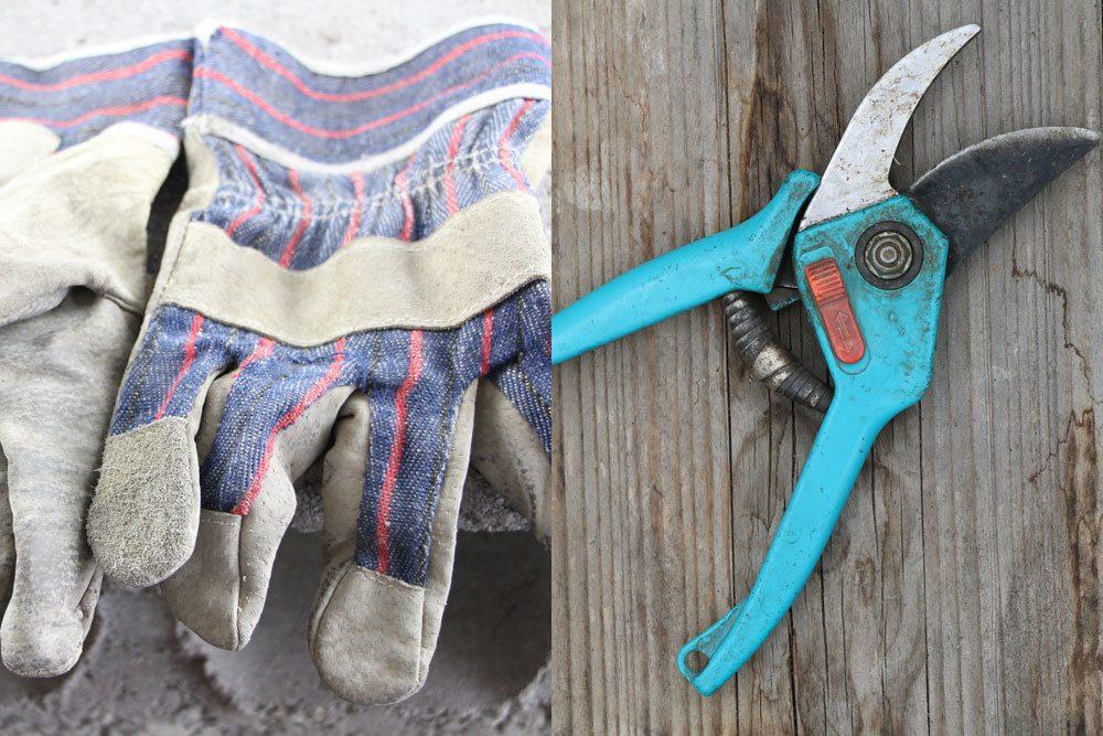 Gartenschere, Handschuhe zum Gräser schneiden benutzen