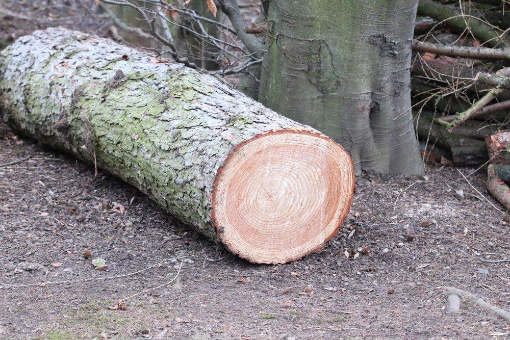 Baumfällgenehmigung für Bäume einholen