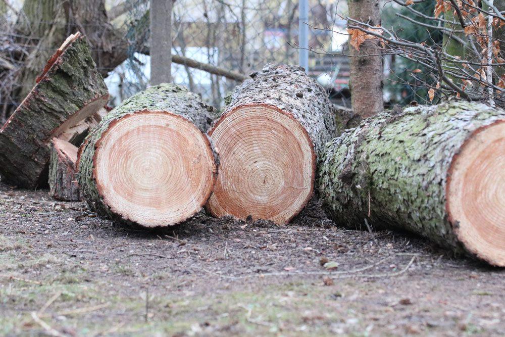 für eine Baumfällung müssen Gründe angegeben werden