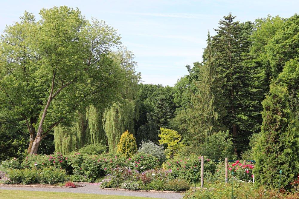 auch Privatbesitz mit Bäumen bedarf einer Baumfällgenehmigung