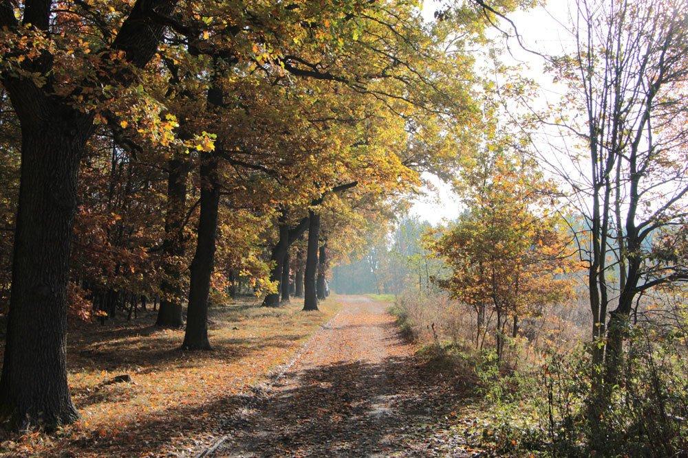 die Baumschutzverordnung muss eingehalten werden