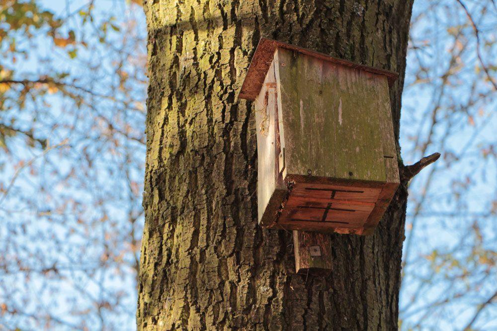 Baumfällgenehmigung muss auch zum Tierschutz beantragt werden