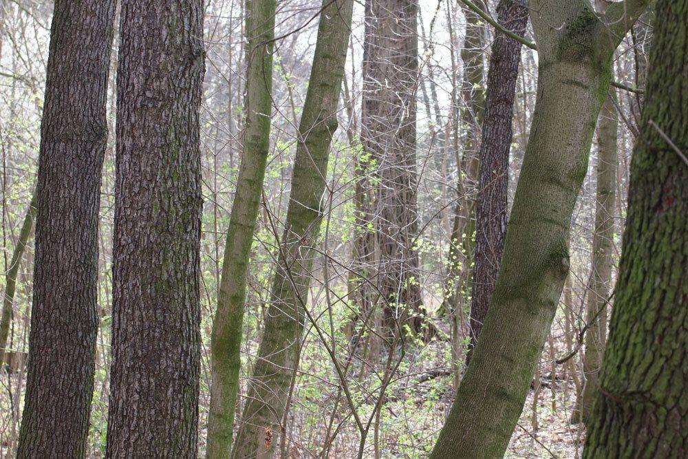 Baumfällgenehmigung basiert auf Bundesnaturschutzgesetz