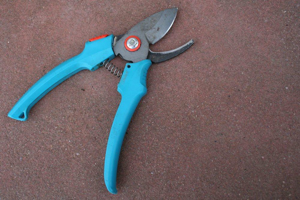 Bougainvillea mit scharfem Werkzeug schneiden