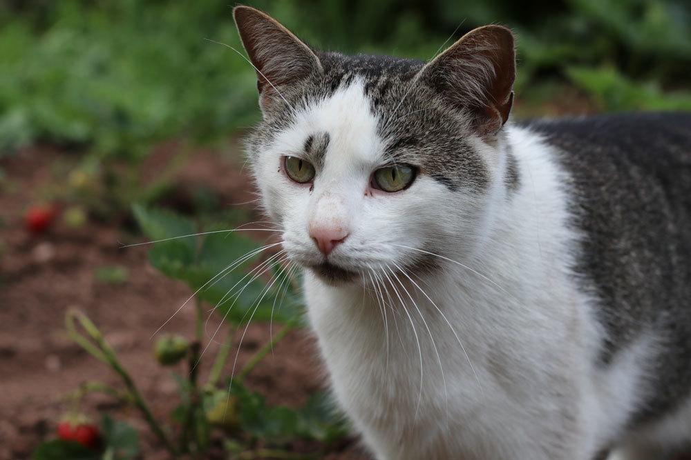 Dracaena ist giftig für Katzen