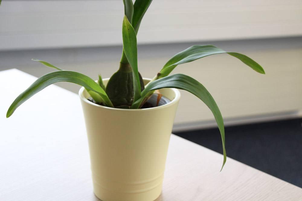 Orchideentöpfe gibt es in unterschiedlichen Materialien