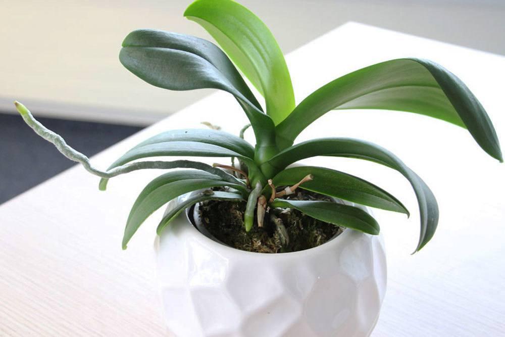 Orchideen im richtigen Übertopf