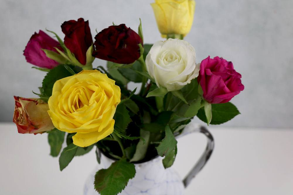 geschnittene Rosen aus dem Garten als Vasenschmuck