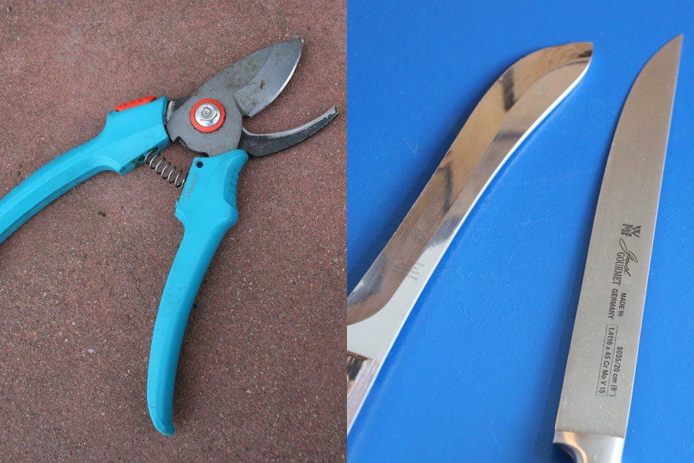 Rosmarin mit Schere, Messer schneiden oder pflücken