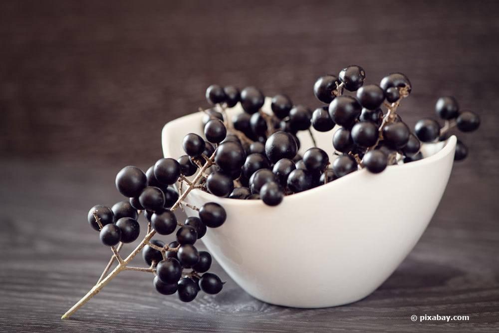 satt schwarze Beeren der Ligusterhecke