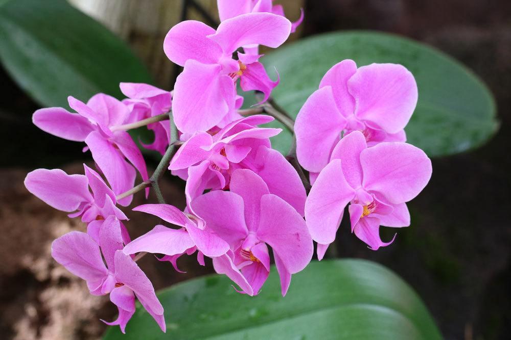 Orchideen exotische Schönheiten für Wohnräume