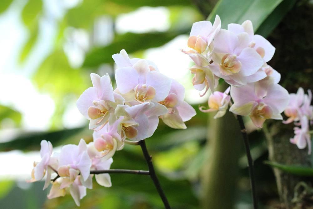 Orchideen gießen oder tauchen