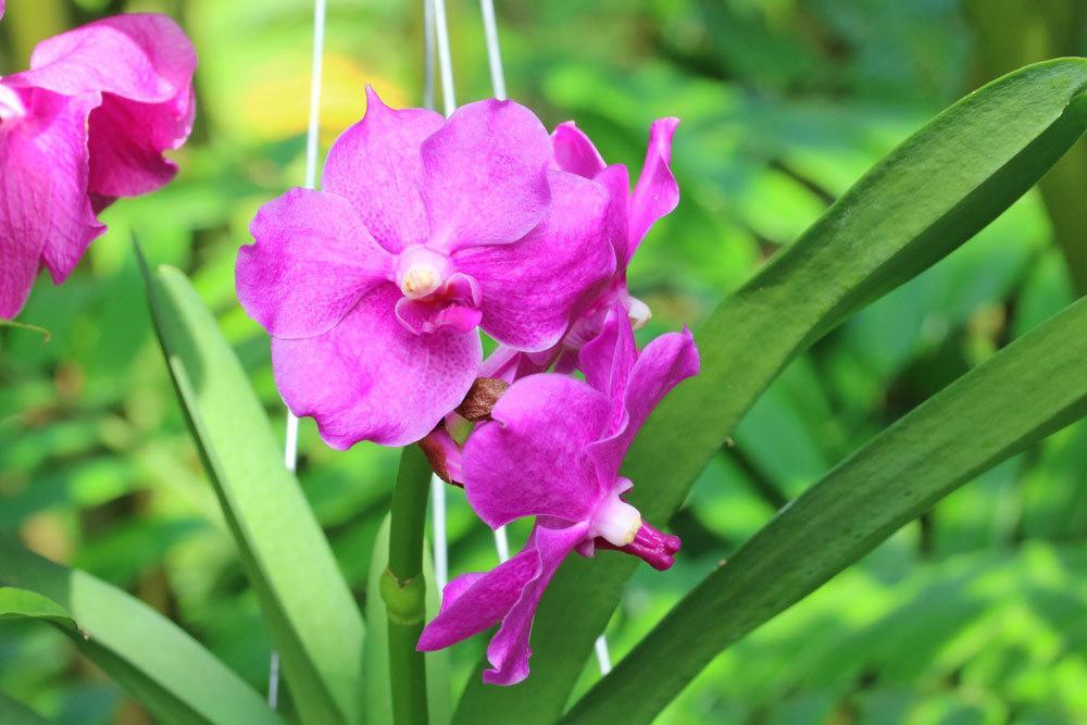 Orchideen mit Krankheiten