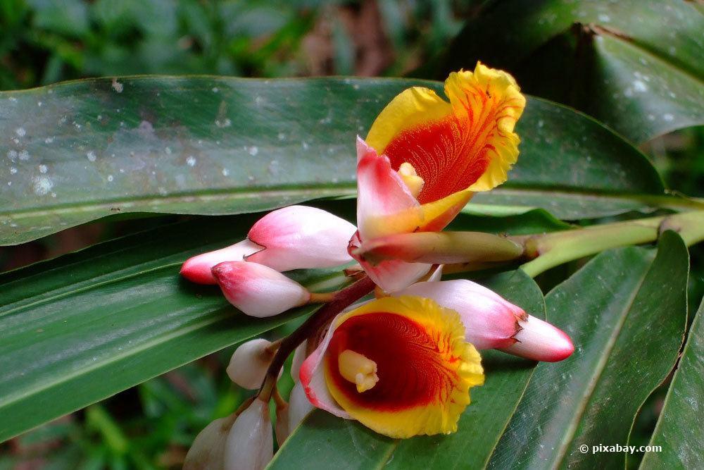 erkrankte Orchideen von anderen Pflanzen isolieren