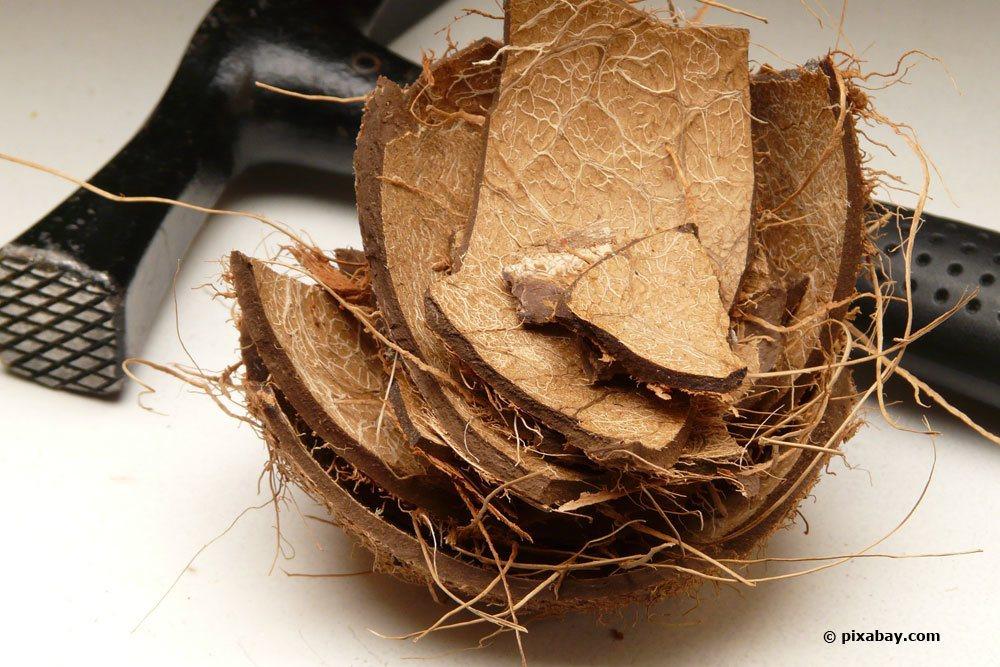 Kokos-Fasern als Substrat für Orchideen