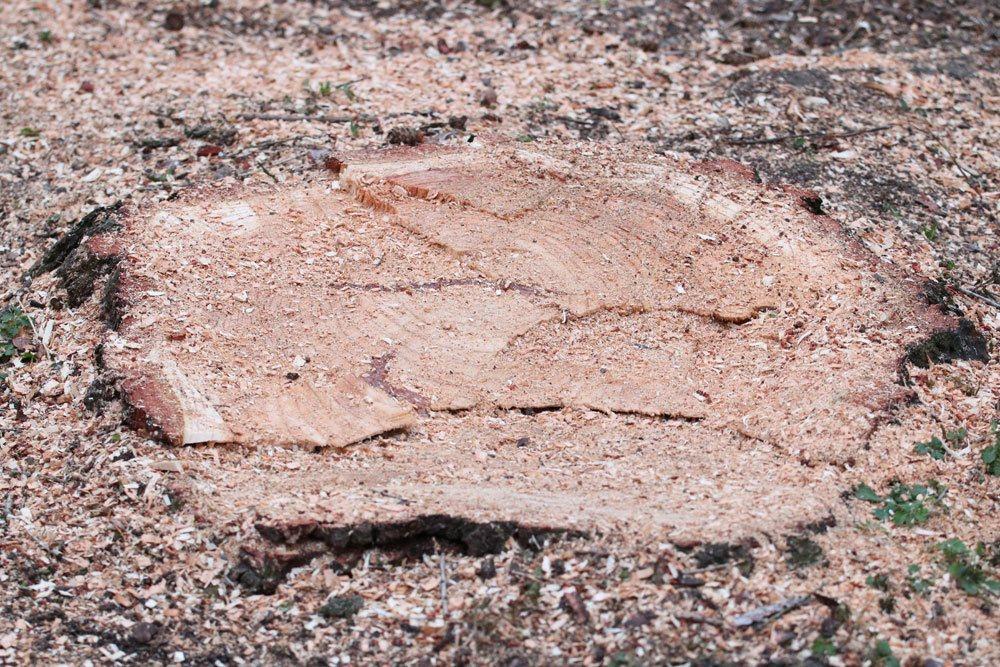 Baumwurzel auf verschiedene Arten entfernen