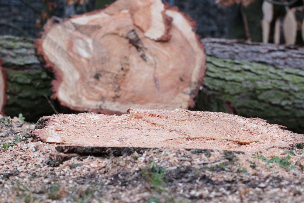 Baumwurzel Entfernen Anleitung Fur 5 Wege Gegen Hartnackige Wurzeln
