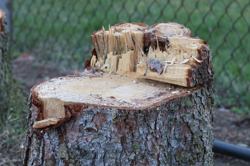 Baumstumpf im Garten entfernen